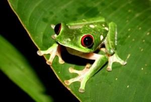 frog-princess